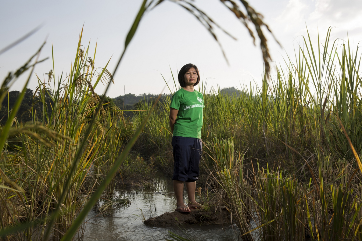 Phattraporn Kaengjumpa, a member of the Khon Rak Ban Kerd Environmental Group stands in a rice paddy in the village of Na Nong Bong in Loei Province. The mountains behind her are the location of a gold mine that the villagers allege continues to contaminate their water supply and affect their crops. Loei, Thailand
