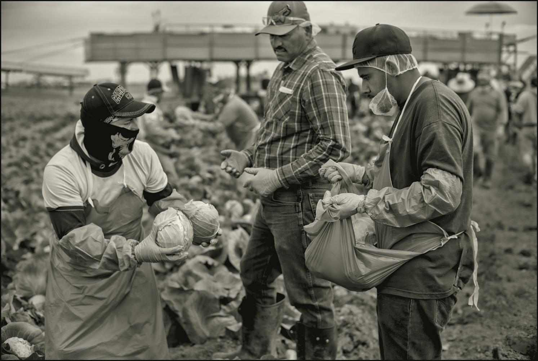 Art and Documentary Photography - Loading Holtville_Harvest_teamwork.PLTv2F.jpg