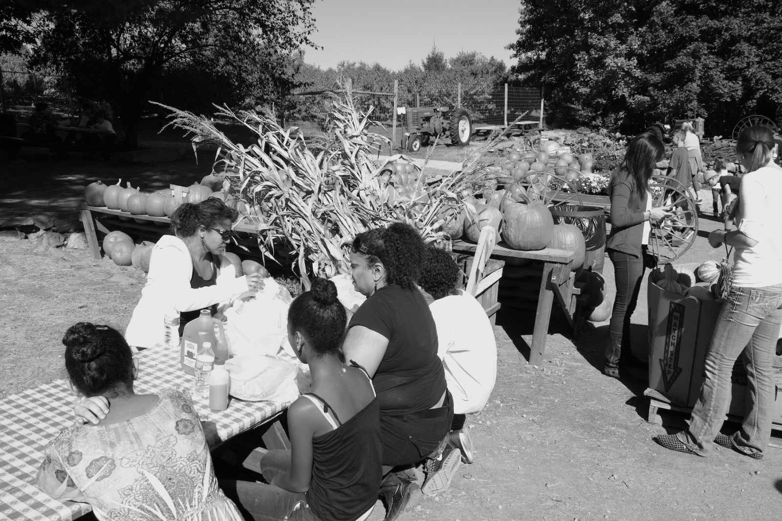 Art and Documentary Photography - Loading African_Pumpkin_pickers.jpg