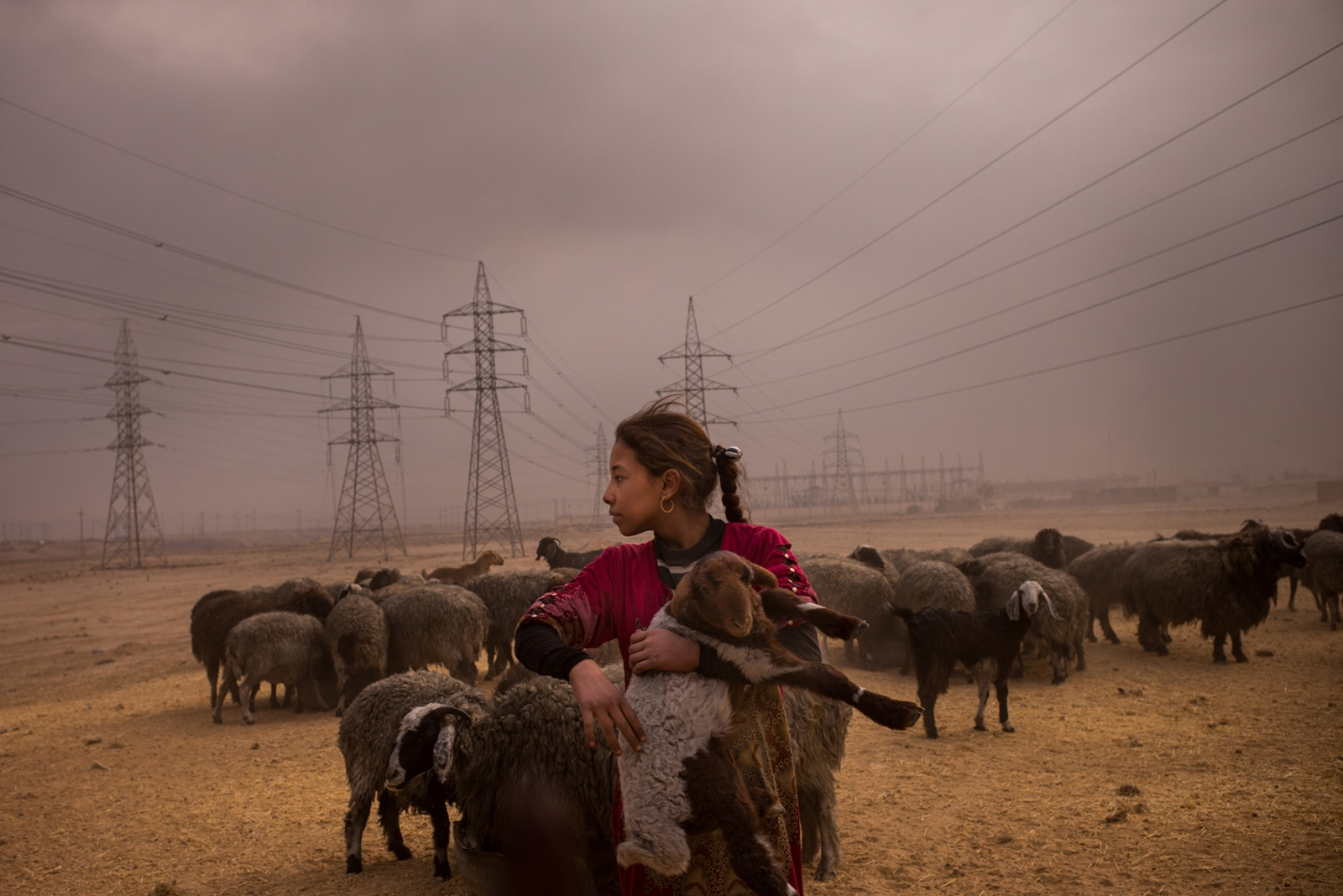 A girl herds a flock of sheep under a darkened sky in Qayyarah, Iraq, their fleece blackened by the smoke from oil fires that have been burning nearby since August. Oil wells were set on fire by retreating ISIS fighters over the summer before the start of the Mosul offensive last month. November 2016.