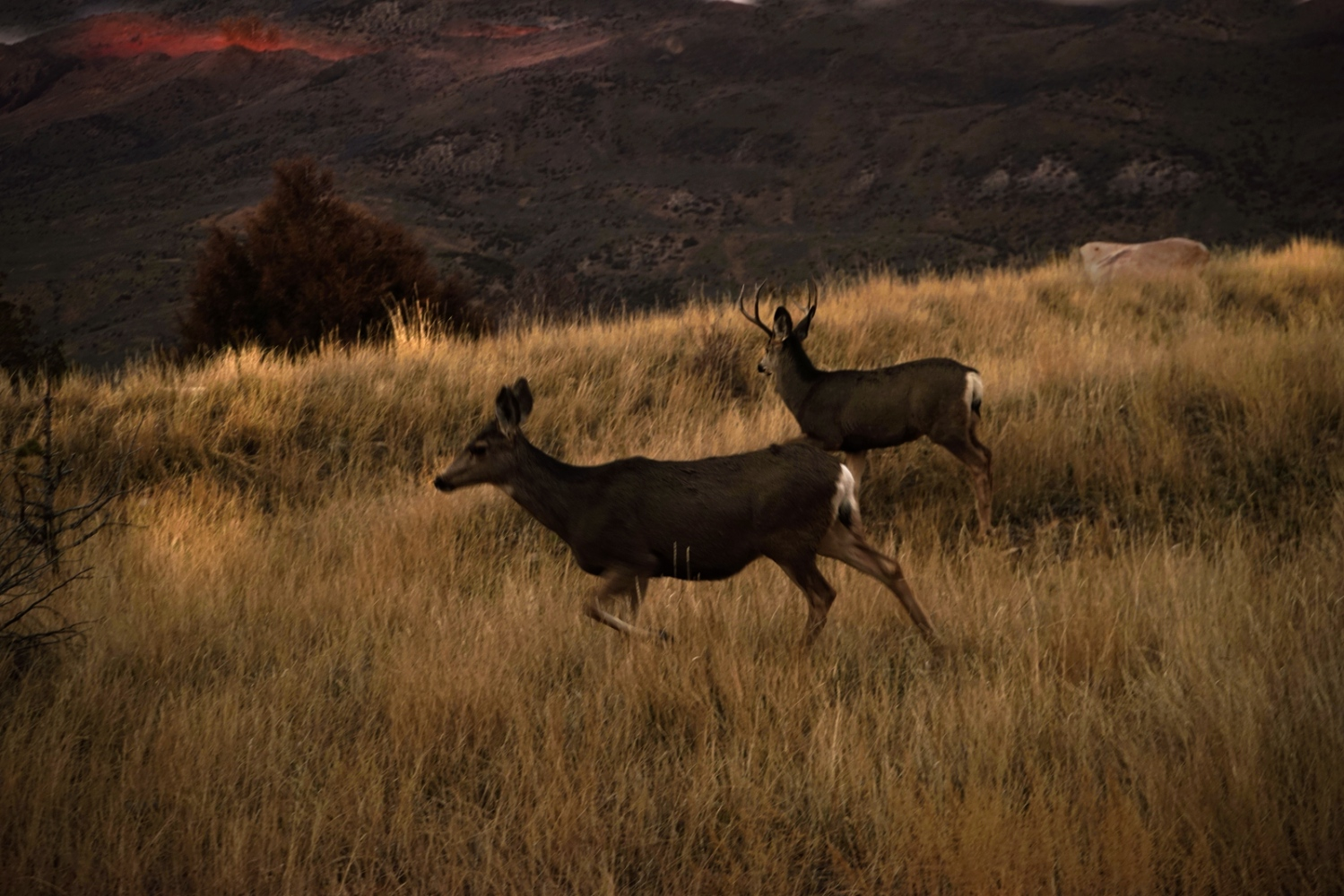 Art and Documentary Photography - Loading 3_Deer._Wollcott__Colorado.jpg