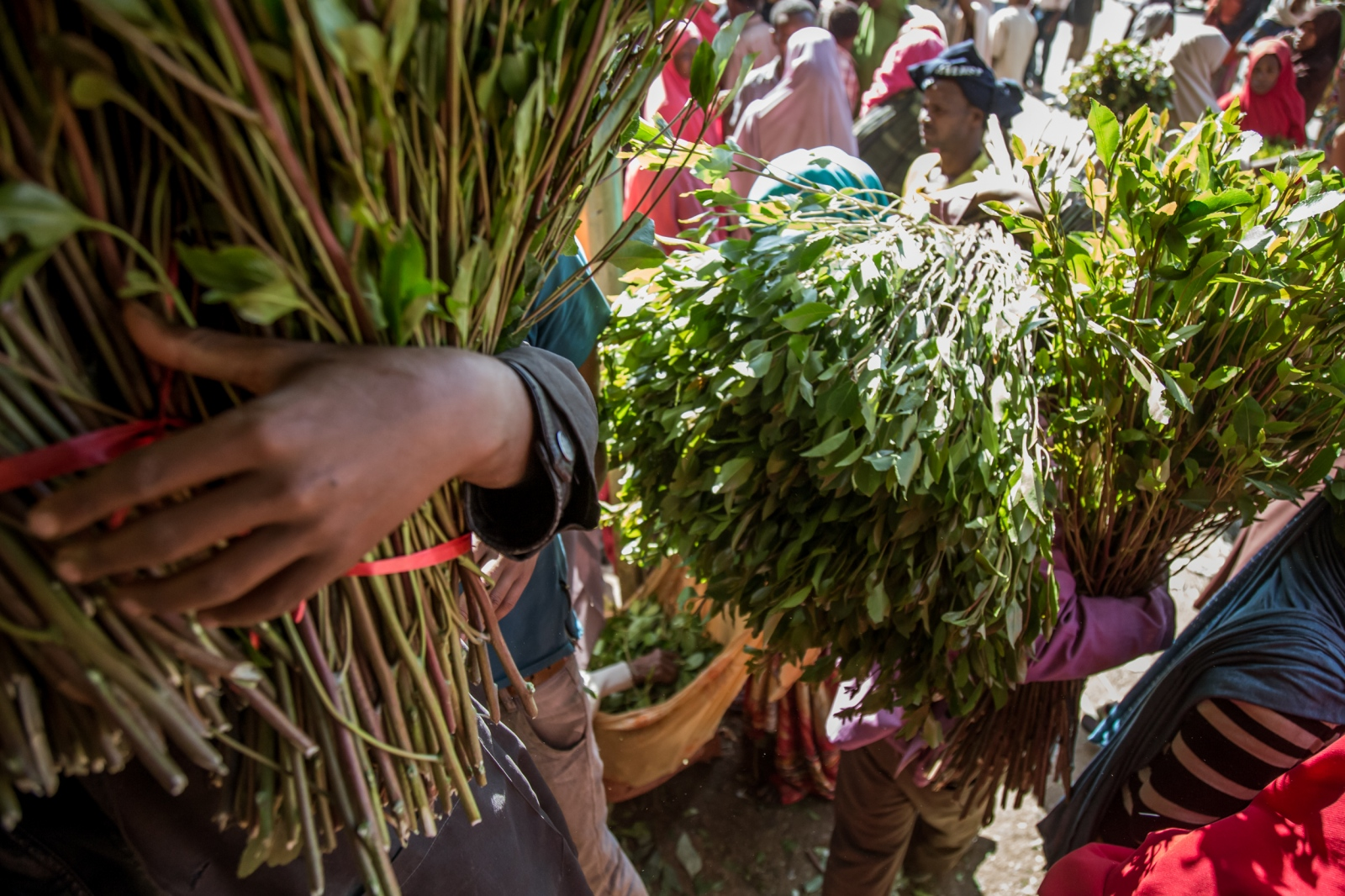 "Khat vendors scurrying the streets of Aweday, the ""capital of khat"" in Ethiopia. In the Horn of Africa, khat is an institution, wielding enormous economic impact, as well as playing a major social and cultural role in societies."