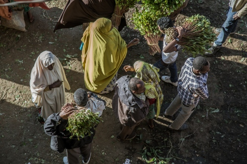 Khat is a mildly narcotic plant that has been chewed and enjoyed socially for centuries in the Horn of Africa. It is picked and freshly sold in the mornings, as the main active ingredient Cathinone is only present in the leaves if they are less than 48 hours old.