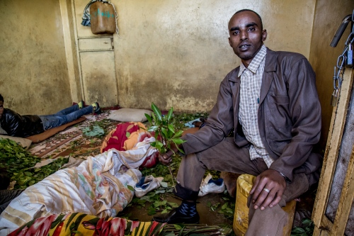 Khat trader in a warehouse. Khat is an essential source of income for millions of Ethiopian farmers, middlemen and traders. Nearly half a million hectares of land are now estimated to be used for khat cultivation, with many of those cultivating it having switched from coffee.