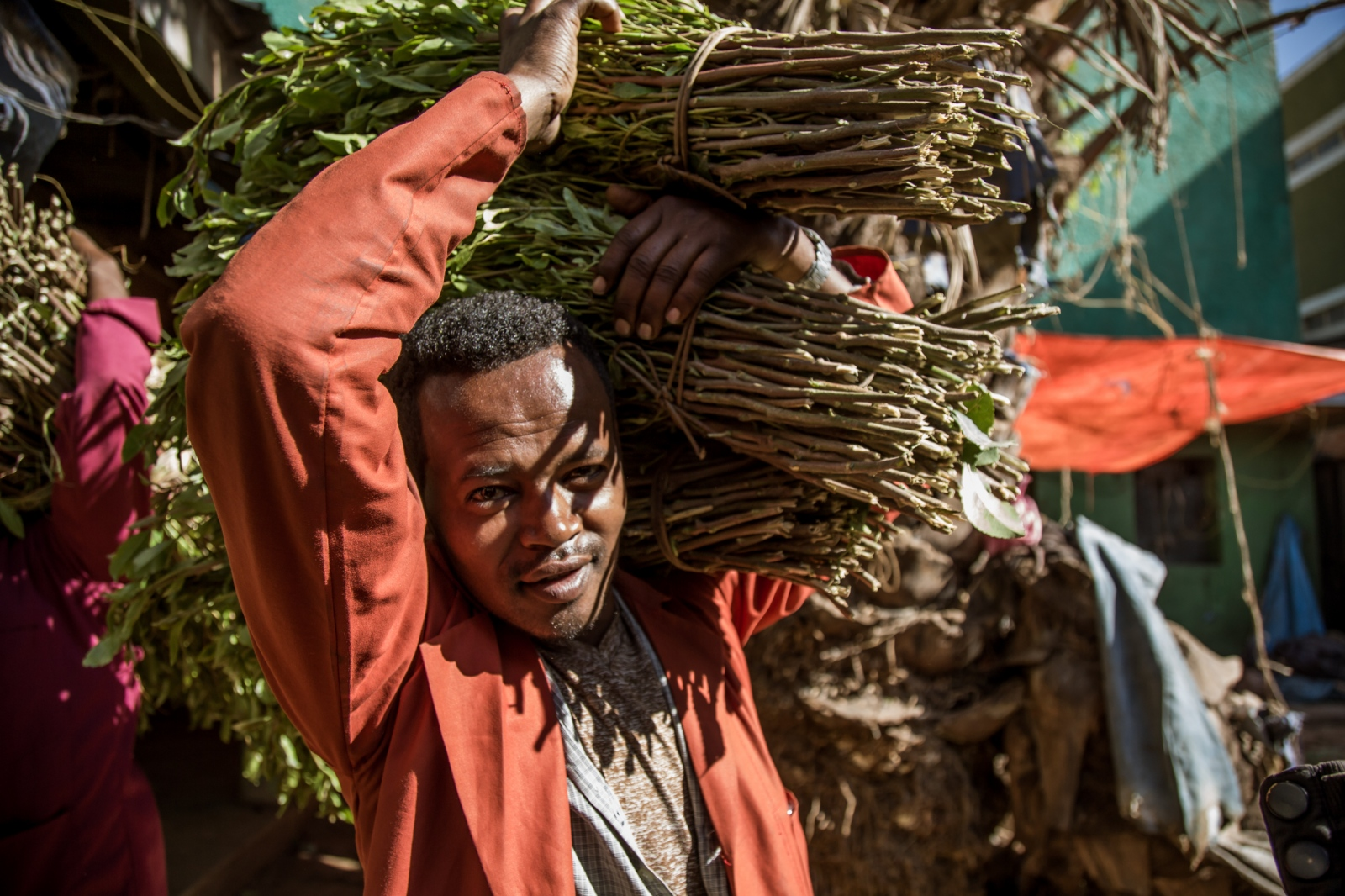 Ethiopian man carrying bundles of khat on the largest Ethiopian khat market in Aweday near Harar. The production of khat in Ethiopia has boomed over the last two decades, making the country the world's leading source.