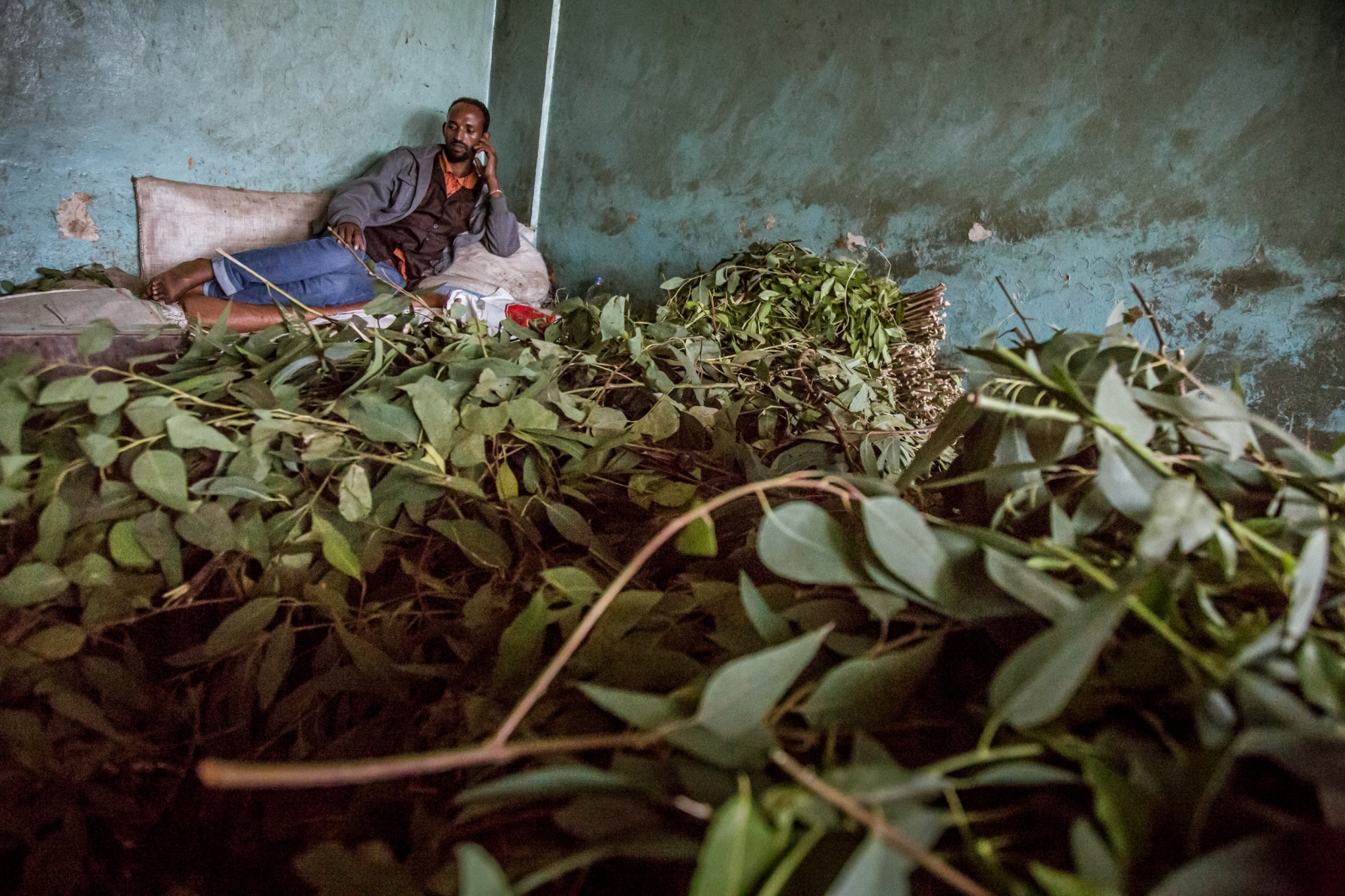 In warehouses, the khat leaves are sorted by their quality for export, mainly to Djibouti and Somaliland but also to parts of Europe. Export quality khat is packed and sent everyday to countries that do not ban the plant.