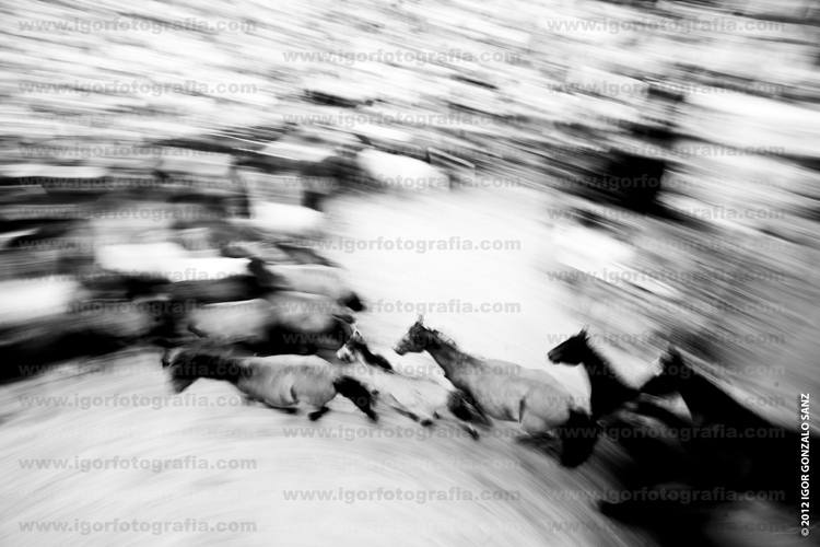 Art and Documentary Photography - Loading 070712IGS_R02.jpg