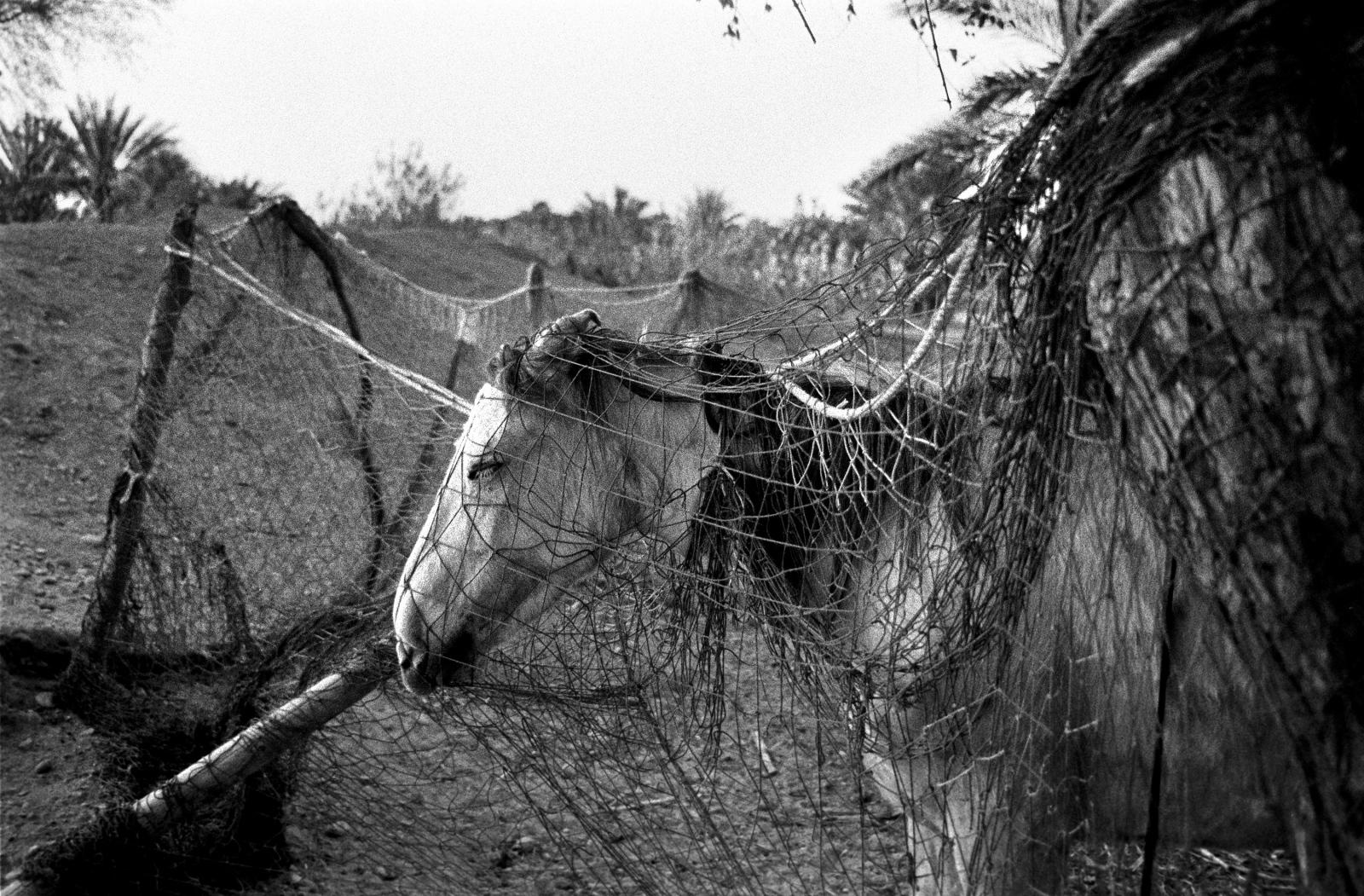 Art and Documentary Photography - Loading 54.jpg