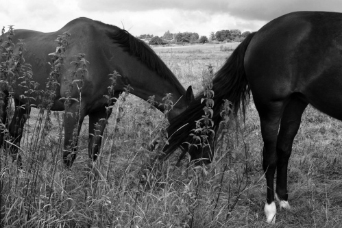 Abeyance  - Photography project by Sarah Jabbari
