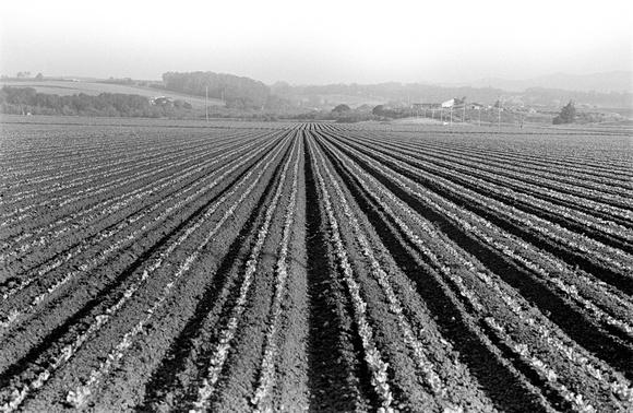 Strawberrry fields forever. Watsonville, CA. 05.97