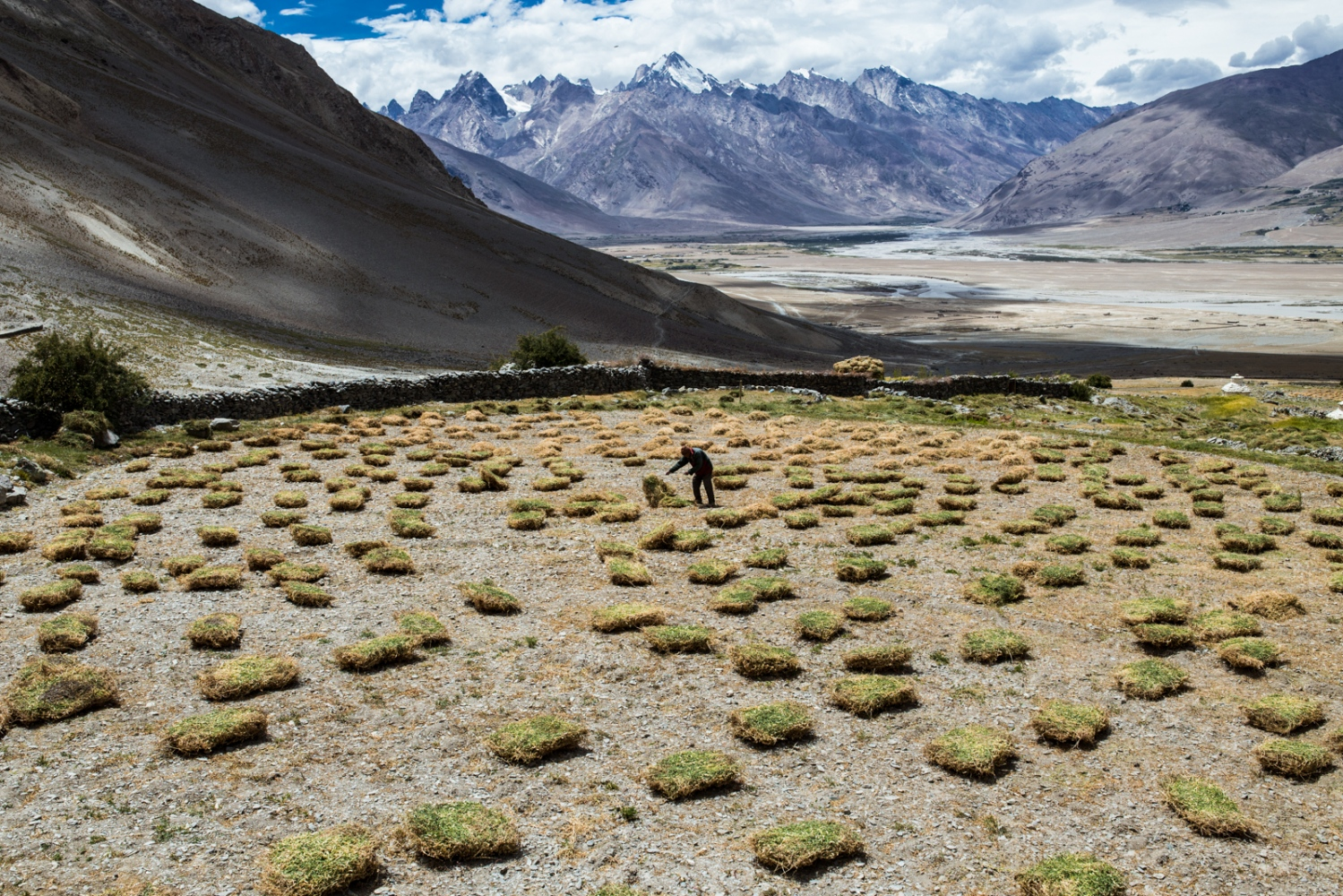 A man attends to his drying fodder crops with the Zanskar range in the background, also facing rapid glacier retreat.