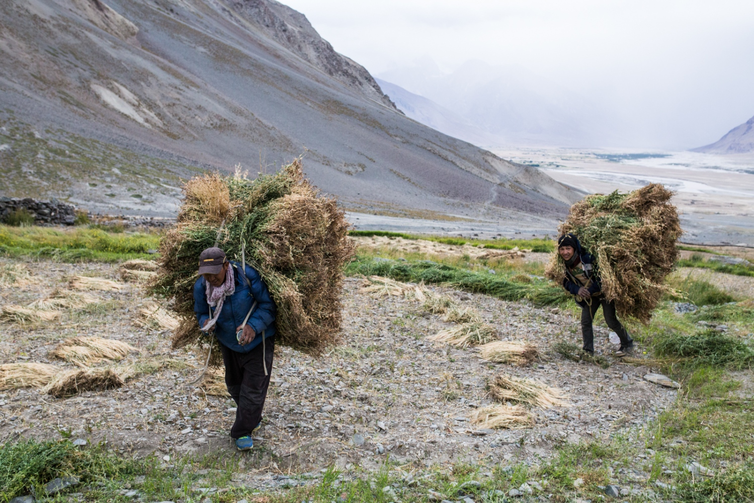 Tashi Stobdan and a hired Nepali migrant worker carry the leftovers of the crop harvest. The fodder is used as food for Kumik's livestock over the winter period.