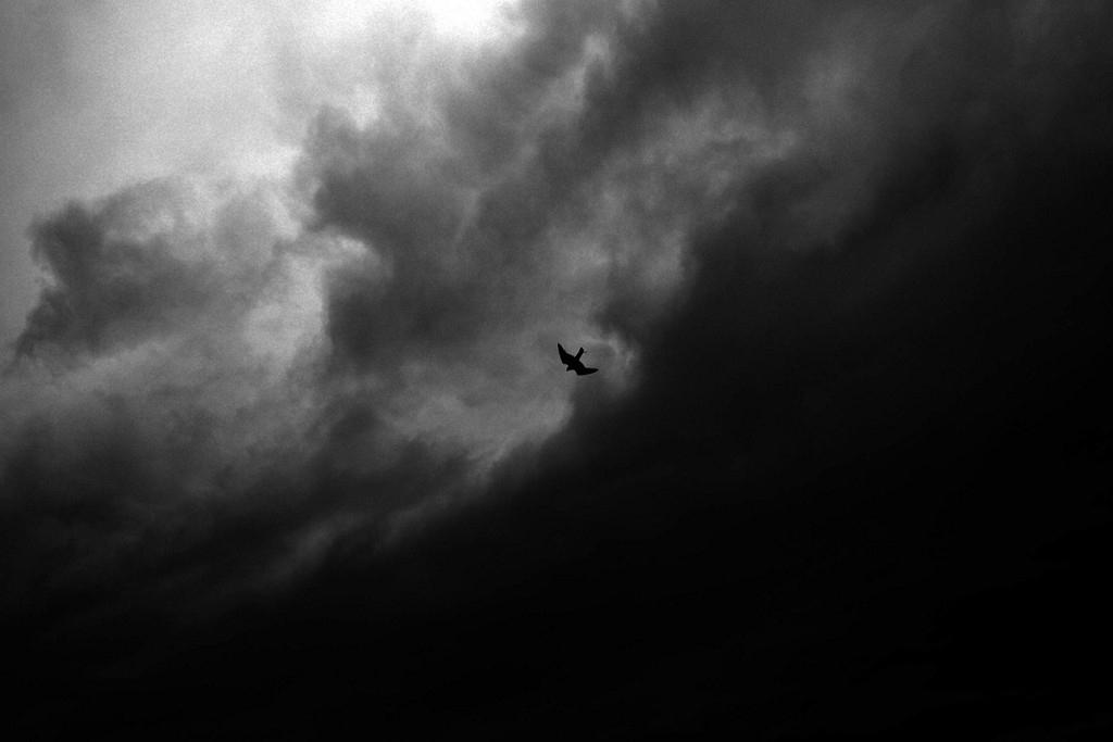 Art and Documentary Photography - Loading Jabbari_Sarah_22.jpg