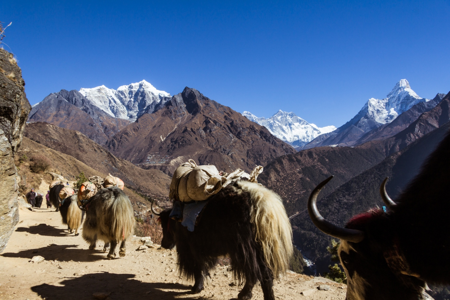 Photo by Ashley Crowther @ashleycrowtherorg for @everydayclimatechange: Yak's carry supplies high into the Everest Himalayan region located in Nepal. The Himalayas have long been called the Earth's third pole, as contains the world's largest stores of ice that are located outside of the polar regions. Due to this vast amount of ice the glaciers feed some of the largest rivers across Asia, including the Ganges, Yangtze, Indus, and Bhramaputra. These rivers and scores more, which cross international boundaries, support the lives of billions of people from agriculture to industry. As climate change intensifies, this gigantic store of ice that is locked up in the mountains is quickly melting. The vast majority of glaciers across the Himalayan region are retreating at a rapid pace. The melting, in the short-term, may provide greater access to water resources throughout Asia. However, in the long-term, the threat that global warming poses on the Earth's third pole threatens the water security of billions, as the ice continually retreats more and more.
