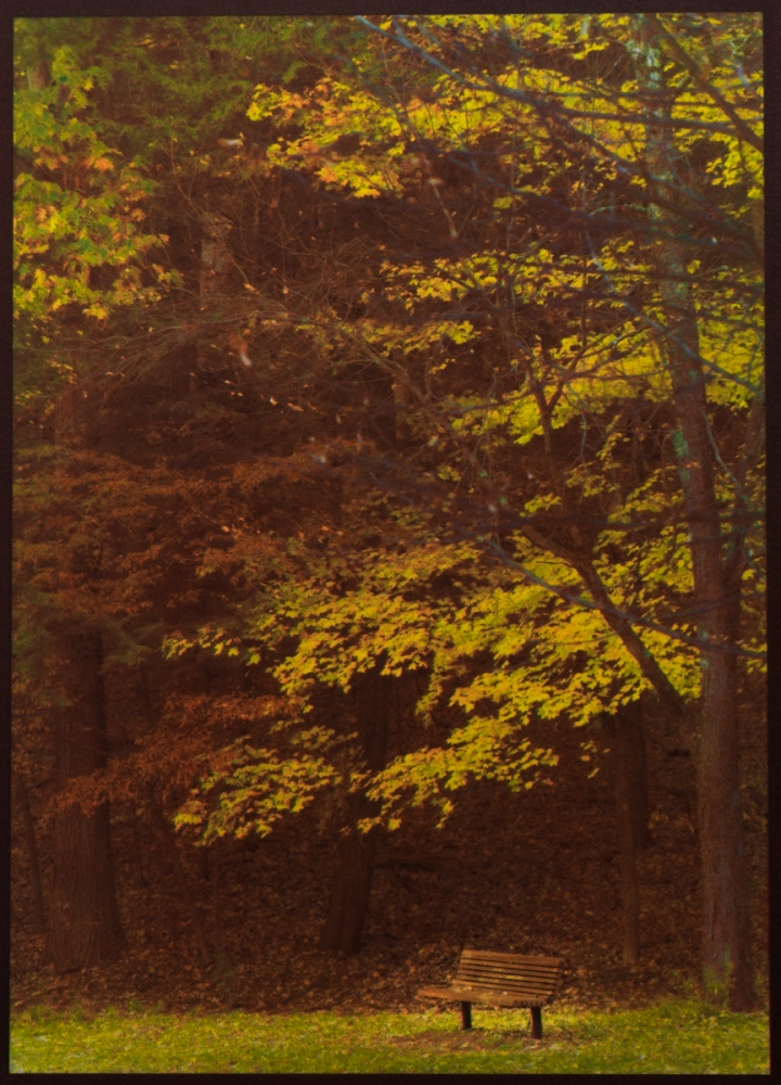 Art and Documentary Photography - Loading Autumn__Saratoga_Spa_Park_DSC07341.jpg