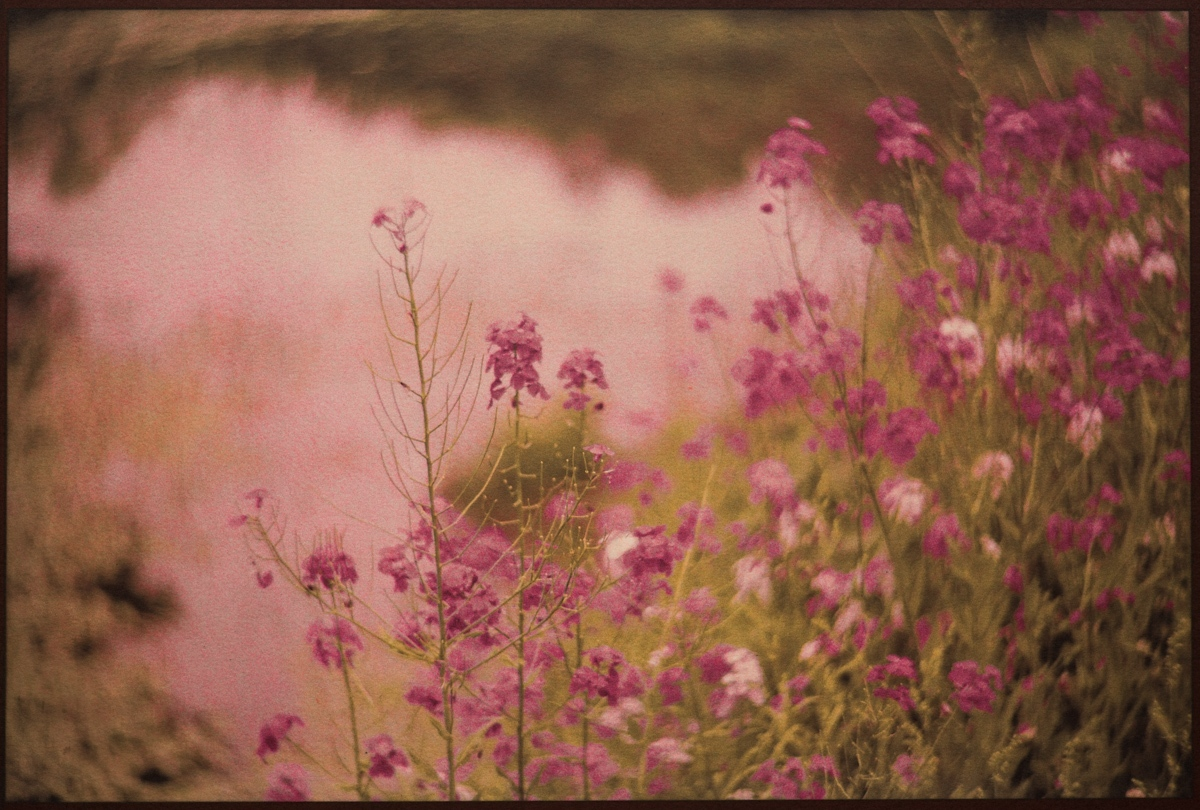 Art and Documentary Photography - Loading Magenta_Flowers_Near_Water_DSC02148.jpg