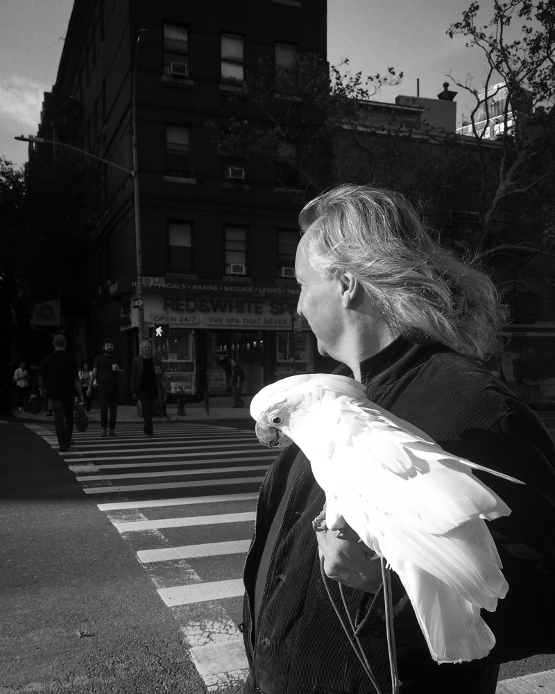 A man and his bird pose for a portrait in Manhattan.