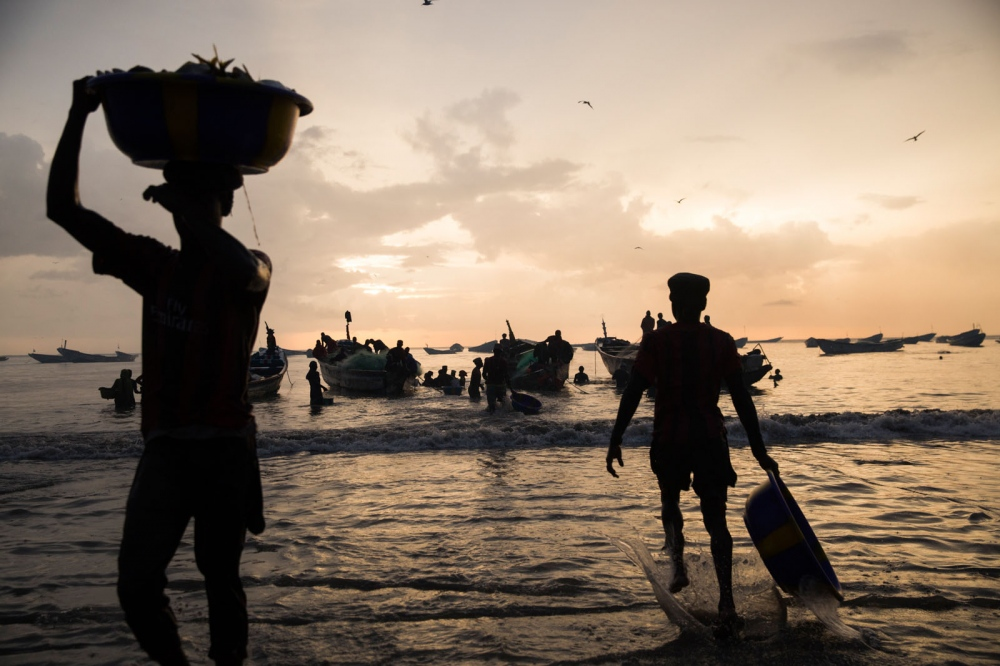 Men carrying fish in basin's on their heads bring todays catch to the beach at Tanji's fish market. Every morning and afternoon African pirogues bring fish back to shore from the Atlantic. The fish are then immediately bought by customers and middle-men creating chaotic scenes involving hundreds of people. But trawling by large foreign vessels of The Gamboia's coast has lead to a reduced catch for these local fishermen. Tanji, The Gambia