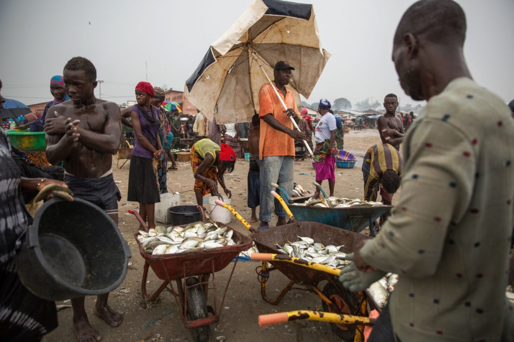 Middle men, vendors and buyers all congregate at Gambia's largest fish market of Tanji every morning and afternoon after small African pirogues bring fish back to shore from the Atlantic.  Tanji, The Gambia