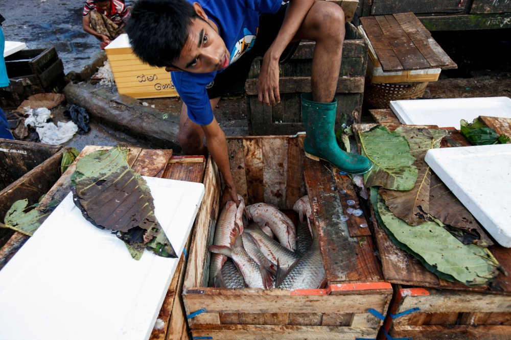 A Burmese man picks a recently caught fish from a box to show a customer at Yangon's largest fish market on the outskirts of the city. Yangon, Myanmar