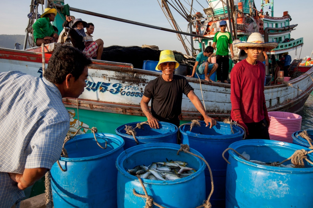 A large fishing trawler unloads is catch caught the night before. This ammount of fish comes from just one boat and with tens of thousands of boats the Gulf of Thailand's fish stocks have been seriously depleted. Silapacha, Thailand