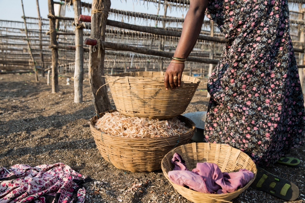 An Indian women prepares shrimp to dry in the sun in a remote fishing community of India's west coast. Dahanu, India