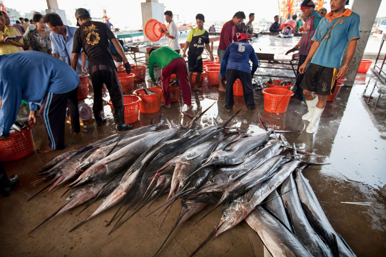 A skool of large sail fish caught by a Thai trawler are unloaded and sold at Phuket's main port. Phuket, Thailand