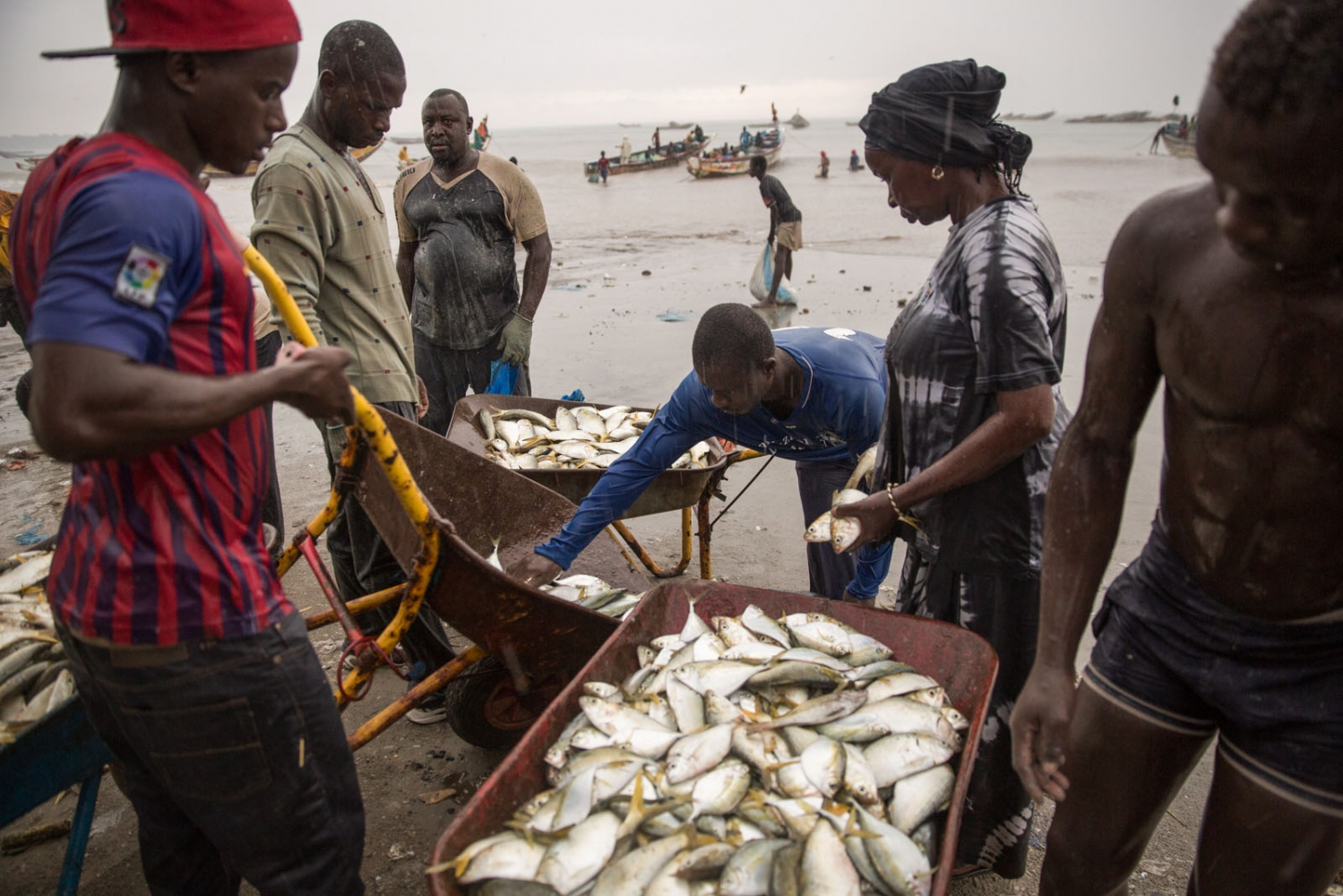 On the beach at Tanji is Gambia's largest fish market. Every morning and afternoon African pirogues bring fish back to shore from the Atlantic. The fish are then immediately bought by customers and middle-men creating chaotic scenes involving hundreds of people. Tanji, The Gambia