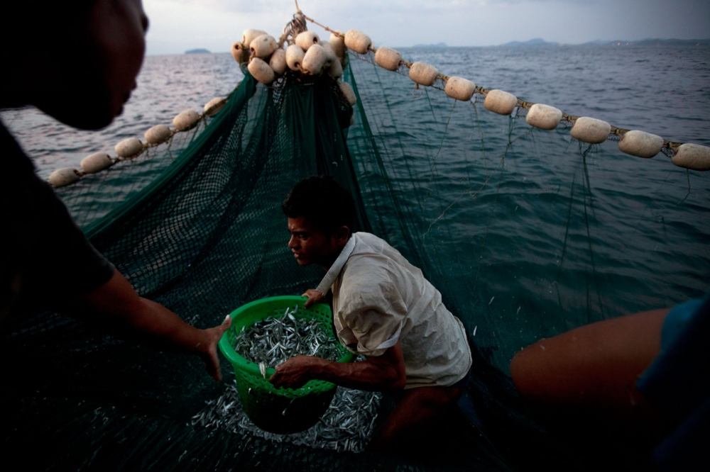 Burmese fishermen working all night on a Thai trawler boat off the coast of Phuket. Thailand is the third largest exporter of fish in the world after China and the US. Its fishing fleet is vast, but years of unregulated trawling has causes incredible damage to fish stocks. A 3 kilometer nursery zone exists around the whole coastal region, but this is often ignored as punishments are lenient. Most fishing is done at night when trawlers, varying in size, leave for the darkness of the sea returning in the morning with their catch that in many cases has more than halved in recent years. Gulf of Thailand