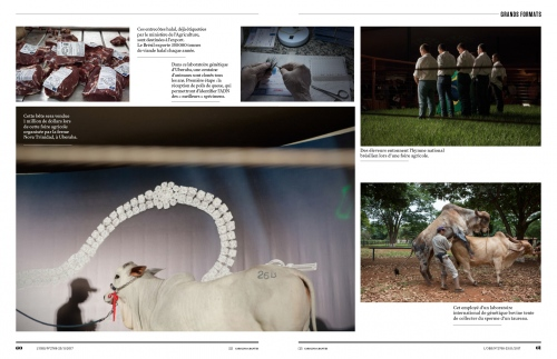 https://www.theguardian.com/environment/2018/may/10/the-million-dollar-cow-high-end-farming-in-brazil-photo-essay