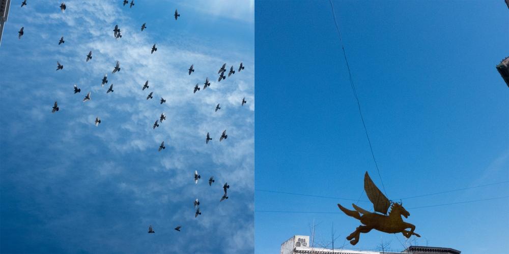 Photography image - Loading pegasus-pigeons2_for_visura.jpg