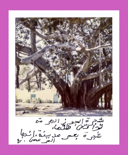 The old walnut tree dancing with her shadow  It is a tree with the age of a city  That city is La Marsa.  N.A.
