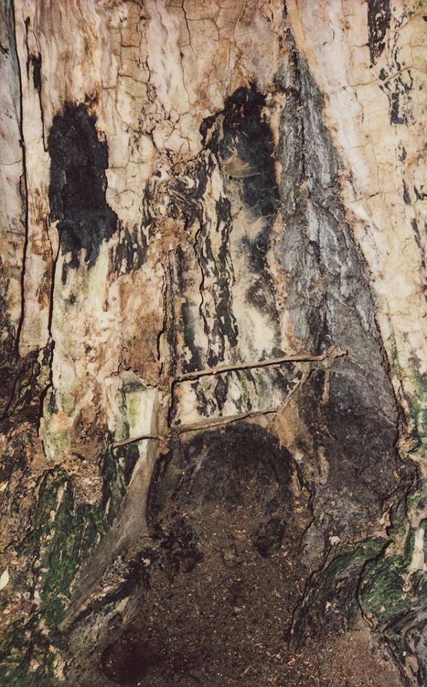 Art and Documentary Photography - Loading Tiergarten_010.jpg