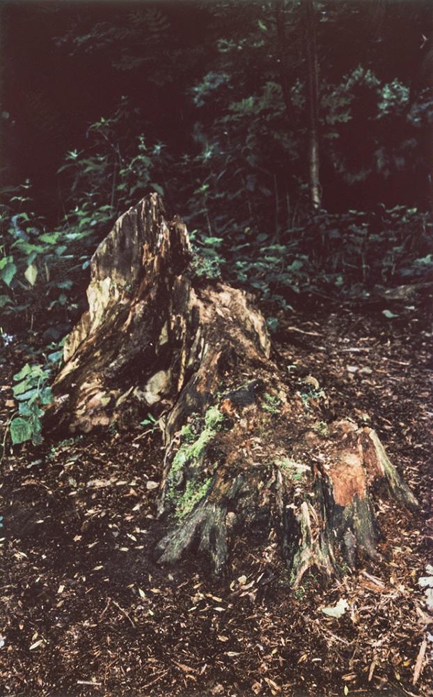 Art and Documentary Photography - Loading Tiergarten_035.jpg