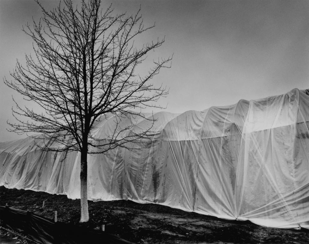 Art and Documentary Photography - Loading 17200-Corridor-Ct-Beaverton.jpg