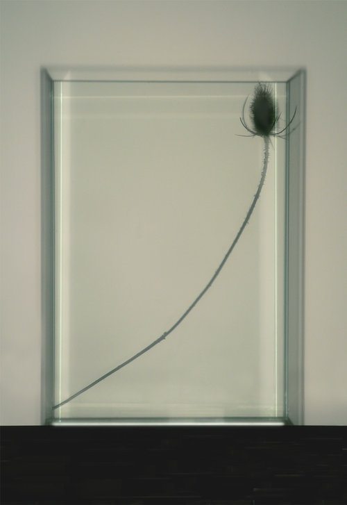 Art and Documentary Photography - Loading Shadow-Thistle-in-Box-2012-17.jpg
