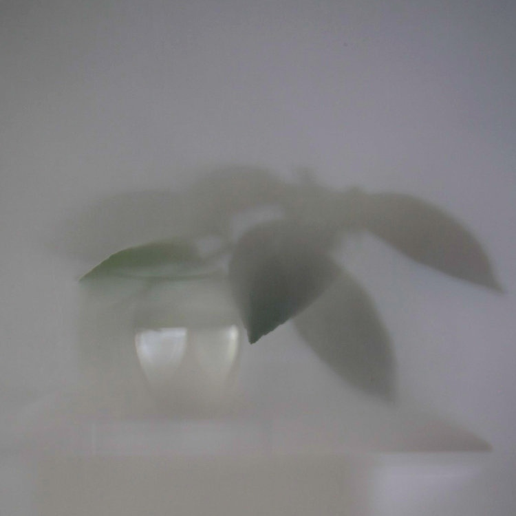 Art and Documentary Photography - Loading Shadows-Lemon-Tree-(-010)-2012-17.jpg