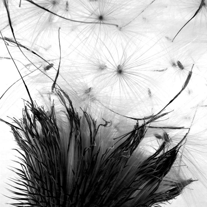 Art and Documentary Photography - Loading AW_2011_(b_w_002).jpg