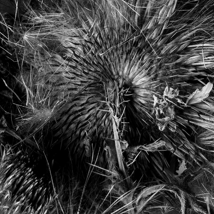 Art and Documentary Photography - Loading Botanicals-1-2017-B_W.jpg