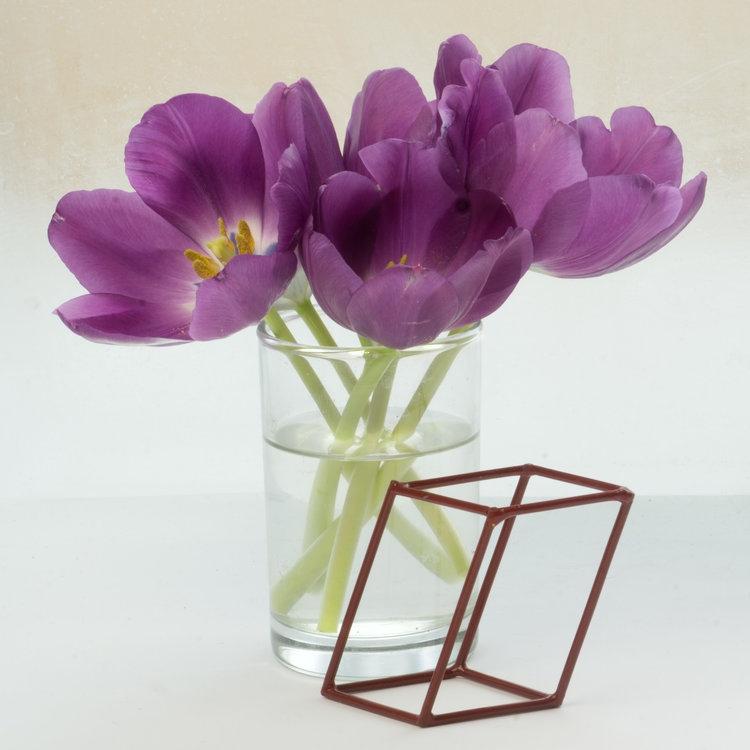 Art and Documentary Photography - Loading Flower-Tulip--4-sq_.-2017---.jpg