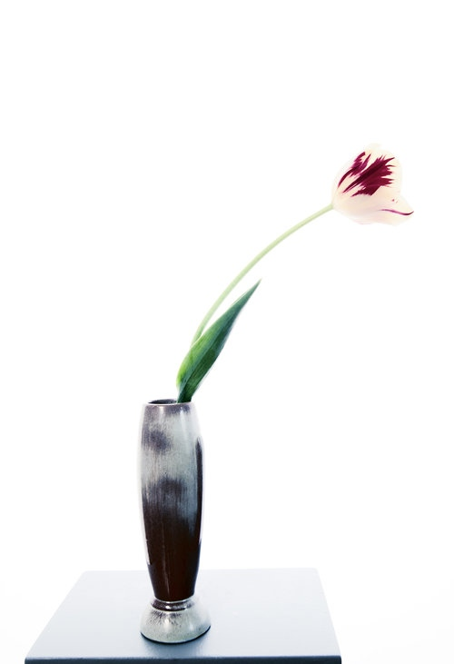 Art and Documentary Photography - Loading Flower-Tulip-1-2014.jpg