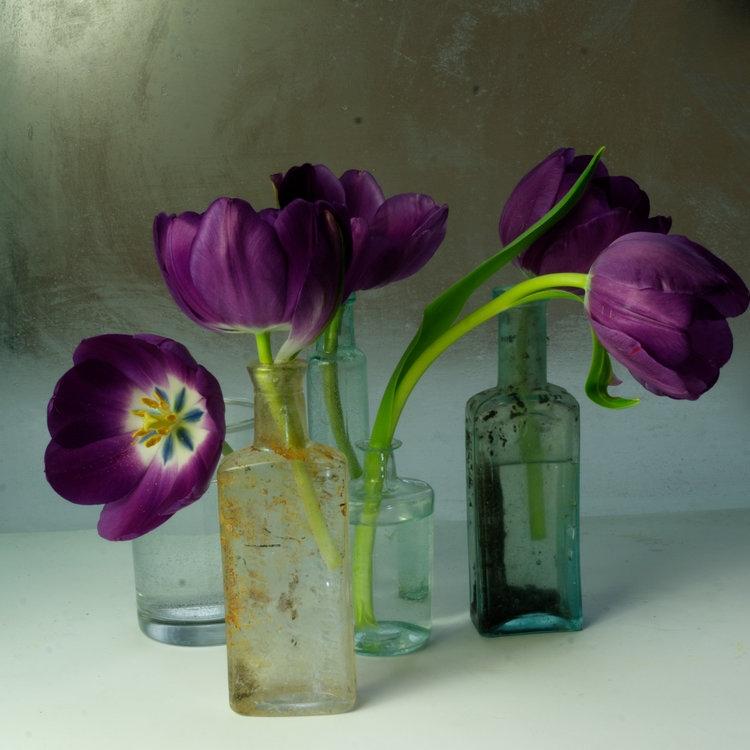 Art and Documentary Photography - Loading Flower-Tulip-2a-2017-.jpg