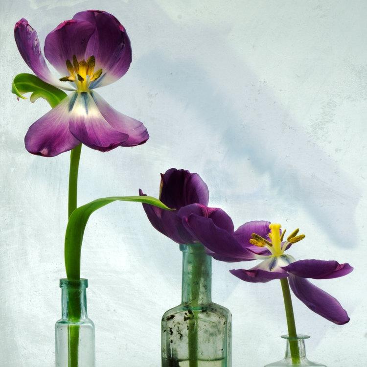 Art and Documentary Photography - Loading Flower-Tulip-12-2017.jpg