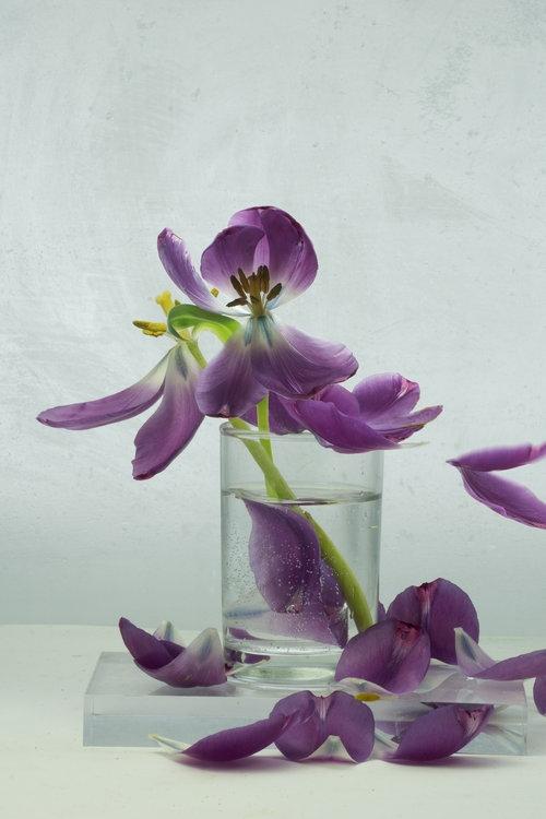 Art and Documentary Photography - Loading Flower-Tulip-14a-2017.jpg