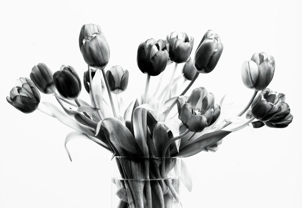 Art and Documentary Photography - Loading Flower-Tulip-Bunch-1-B_W-2017-.jpg