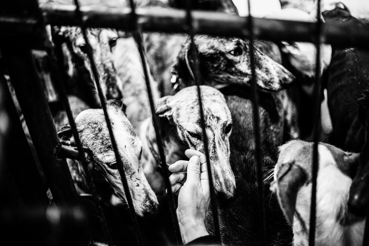 Art and Documentary Photography - Loading Scars_david_arribas.jpg