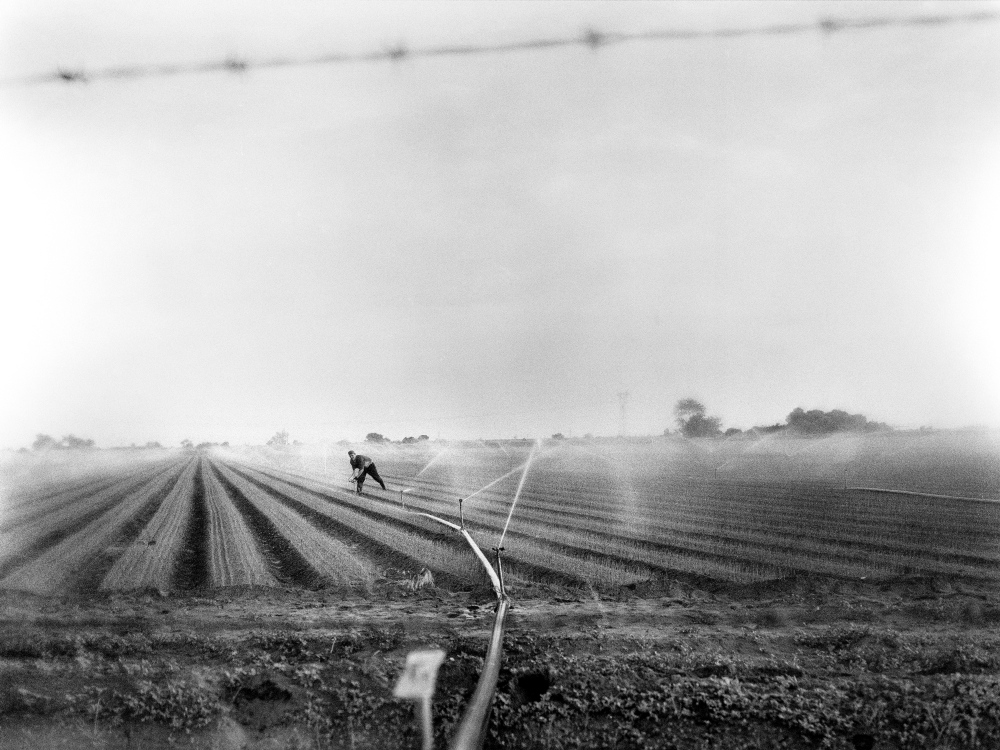 An agricultural laborer tends to an onion field in Sonora Mexico, near the United States border. A majority of the arable land in the region has been purchased or leased by United States based corporate farmers who broker water deals to irrigate their lands. Smaller, privately owned farms cannot compete, as the last of the groundwater supply dries up.