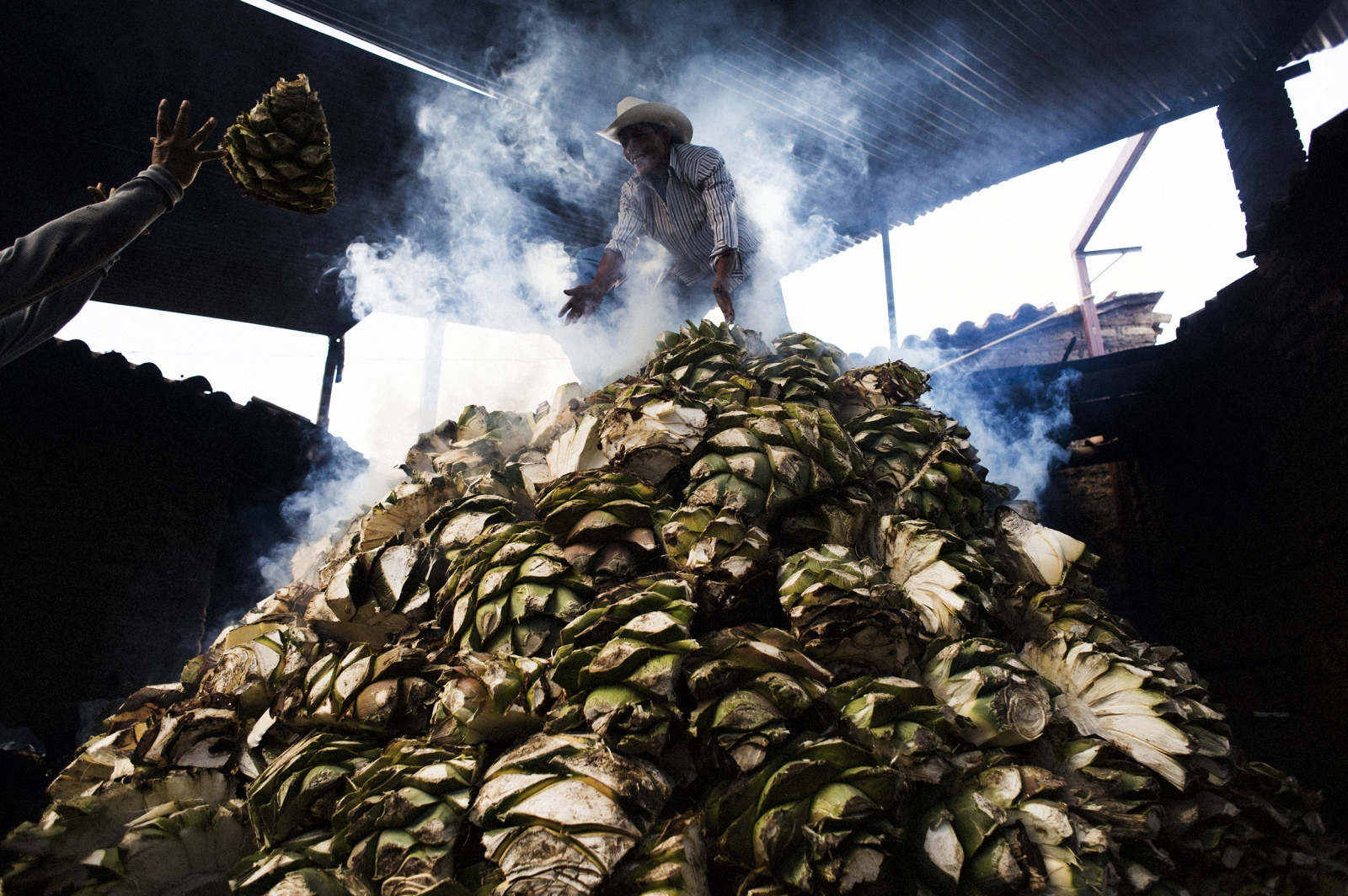 Mezcaleros top off the massive pile of espadín agave during the roasting process. The smoldering agaves will then be covered with earth and left to smoke for three days.