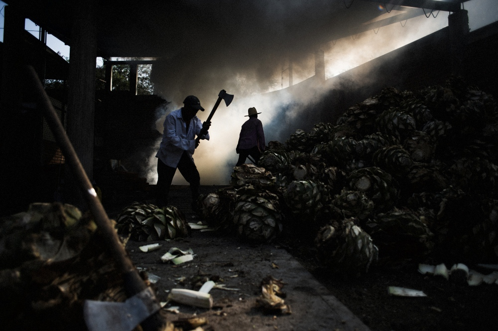 Workers at Fidencio mezcal, a brand which has become popular in the United States, split agave piñas and wheel them to the roasting pit for cooking.