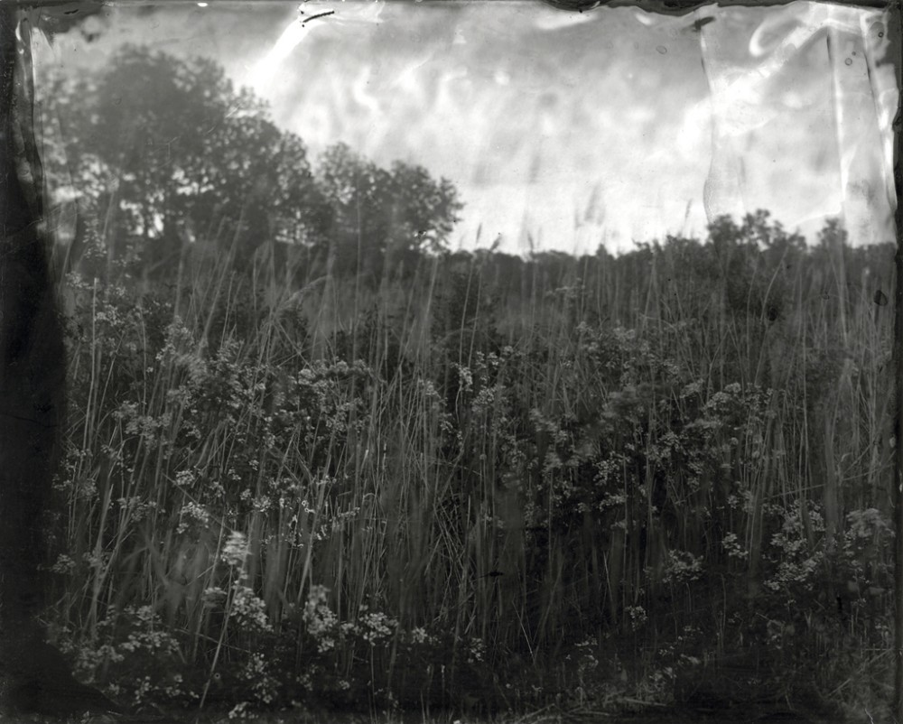 Marsh Grasses, New Jersey, 2008